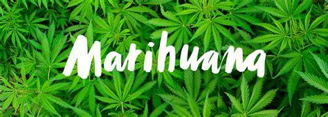 imagenes de weed reales la marihuana y la diabetes tipo 1