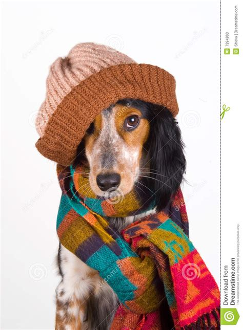 puppies with hats portrait of with hat stock photos image 7394863