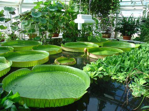 Uw Botanic Gardens File Of Helsinki Botanical Garden Jpg Wikimedia Commons