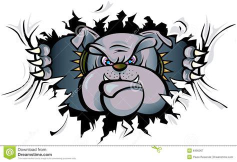 bulldog attacking royalty free stock photography image