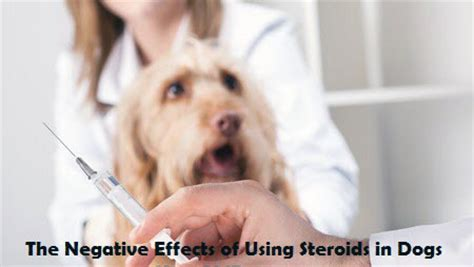 corticosteroids for dogs reversing steroids devastating side effects with alternatives