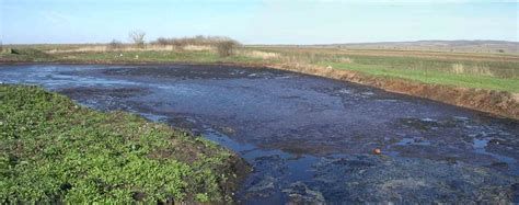 Bio Degrades Into Plain Water by What Is Bioremediation