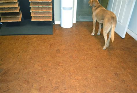 Dogs And Hardwood Floors by Best Laminate Flooring With Dogs Wood Floors