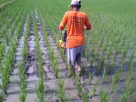 Alat Matun Padi teknologi pertanian modern pembersih padi di sawah doovi