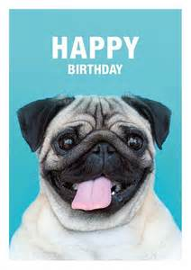 25 best ideas about happy birthday pug on pug puppies pugs and pug