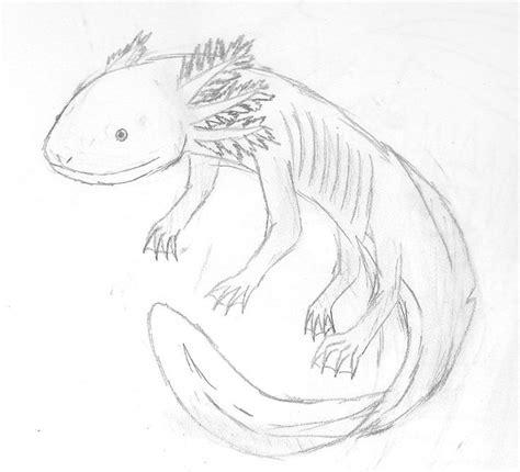 Axolotl Coloring Page by Axolotl Drawing Free On Ayoqq Org