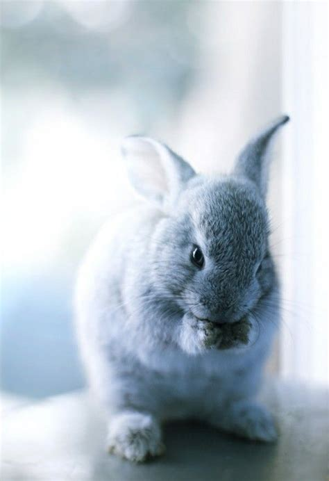 Bantal Peyang Baby Rabbit Blue 17 best images about le bunnies on a bunny animals and rabbit