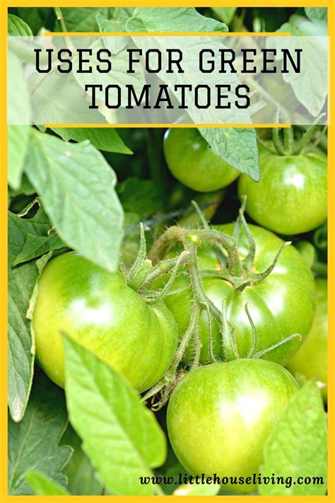 green tomatoes     green tomatoes