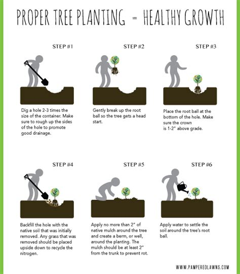 how to properly plant a tree pered lawns inc