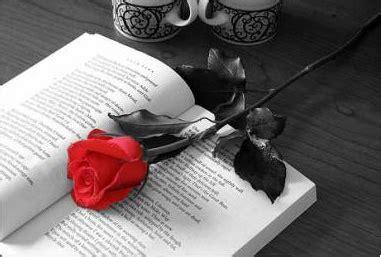 libro por una rosa postales desde el fin del mundo palabras que vuelan en silencio con los vientos australes