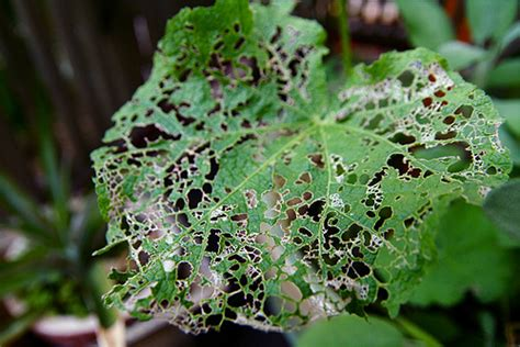 garden pest best money tips 10 organic solutions to garden pests