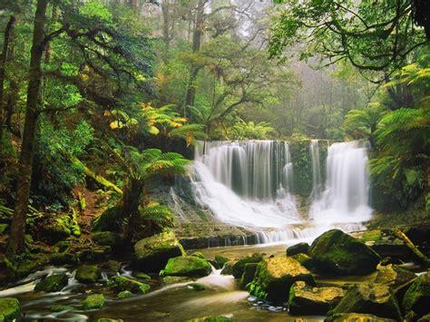 waterfall rocks moss green forest tree fern australian