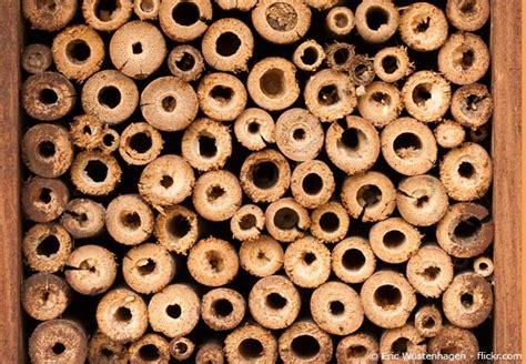 Wie Baut Ein Insektenhotel 3846 by Insektenhotel Selber Bauen Mit Bauanleitung Garten