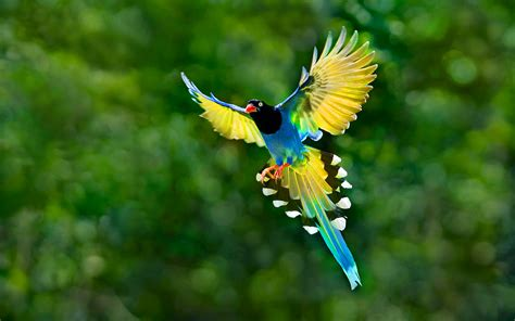 Bird 29 Colors Of Nature 25may2014sunday 013529 Beautiful Bird Flying