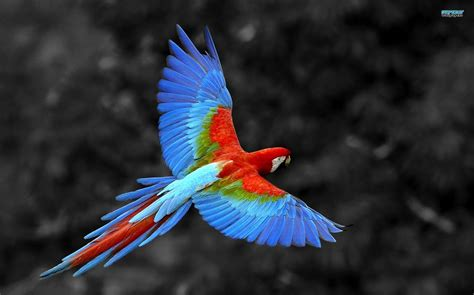 The Most Incredibly Colorful Animals You Ve Never Seen Colorful Animal