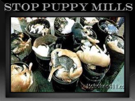 indiana puppy mill rescue newportbeachpuppymill inhumane newport pet store cruelty