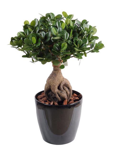 Ordinaire Plante D Interieur Sans Entretien #3: Bonsai-artificiel-arbre-miniature-Ficus-Panda-Ginseng-plante-artificielle-d-.jpg