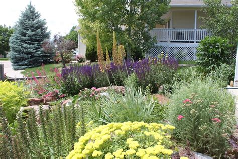 native landscaping plants landscaping network
