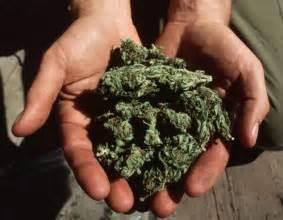 Heavy Marijuana User Detox by Cannabis Users More Vulnerable To Heavy