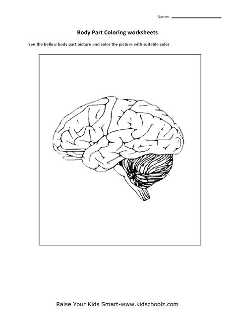 Parts Of The Brain Worksheet by Sheep Brain Coloring Pages