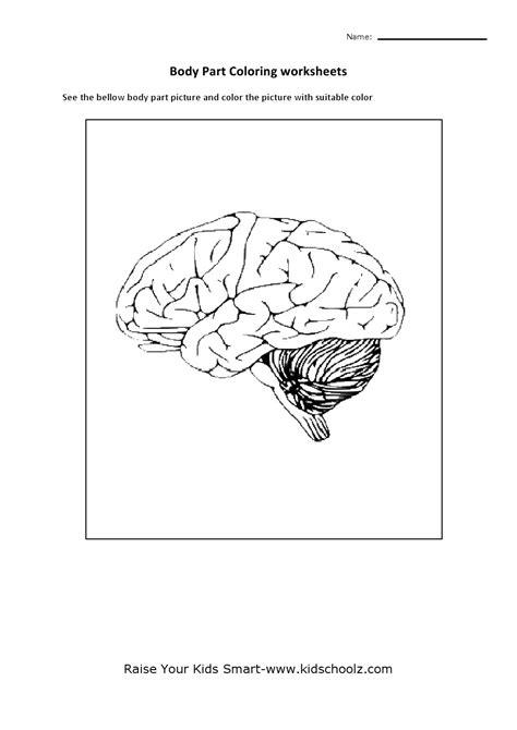 12 Best Images of Brain Parts Worksheet - Brain Label