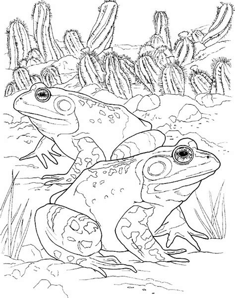 coloring pages frog and toad coloring page frog animals coloring pages 15