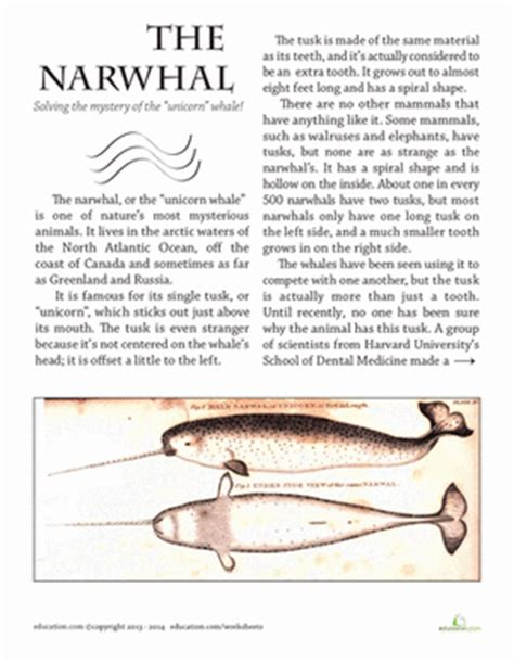narah and the unicorn the original narwhal story books narwhal tusk worksheet education