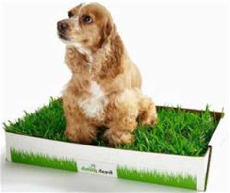 dog balcony bathroom farewell pee pads dogs want real grass