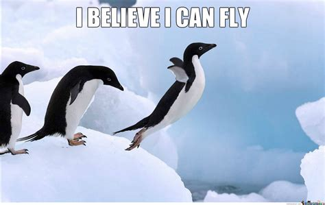 Penguin Meme - penguin believe he can fly penguins photo 37399363