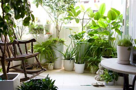 ragnetti in terrazza rimedi naturali alle malattie delle piante idee green
