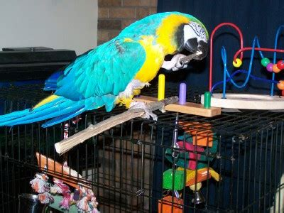 Jo In Pet Chews environmental enrichment peggy s parrot place