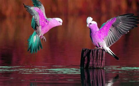 Imagenes Abstractas Alta Resolucion Gratis | imagenes alta resolucion gratis 5000 imagenes en alta
