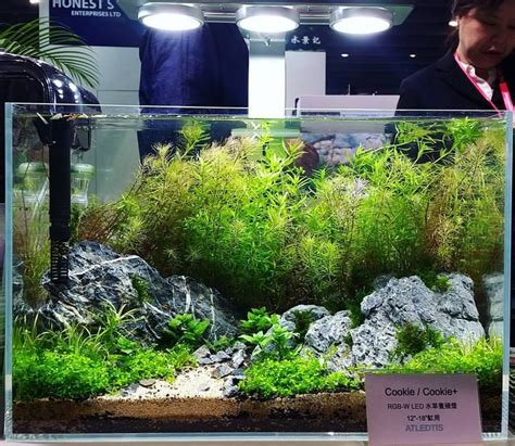 best light for planted tank 13385 best aquascape images on pinterest aquascaping