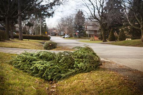 100 christmas tree lot near me where to buy
