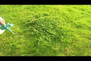 Mäuse Im Haus Tricks by Mittel Gegen Klee Im Rasen Unkrautvernichter Mit