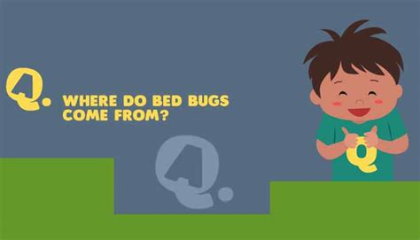 what do bed bugs come from where do bed bugs come from answer me for kids mocomi