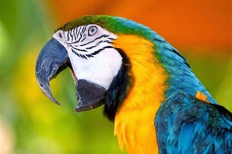 224 best images about burung cantik on pinterest love 17 best images about burung nuri on pinterest