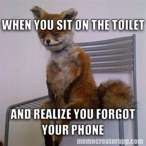 Taxidermy Fox Meme - 43 best fox images on pinterest ha ha fox and foxes