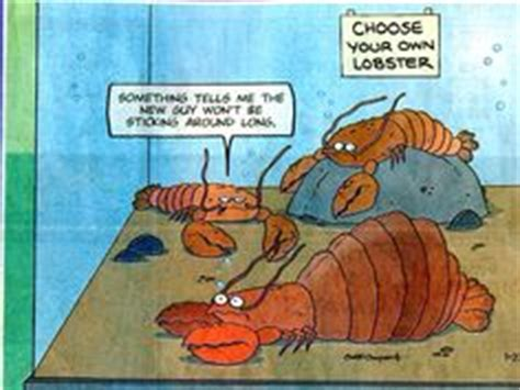 1000  images about Lobster Humour on Pinterest   Lobsters, Lobster bib and Rock lobster