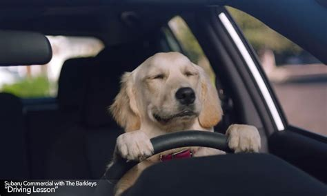 ad of the day subarus road tripping dogs are cute funny and almost new subaru tv commercials feature the barkleys goldstein