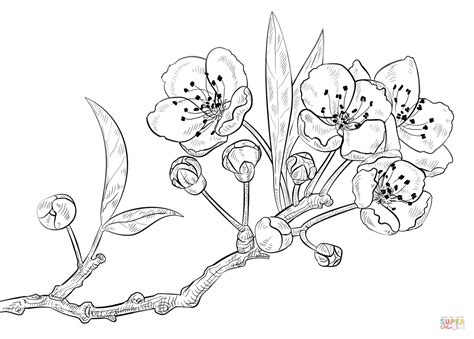 simple cherry blossom flower coloring pages