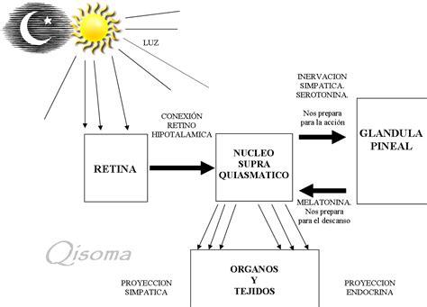 iluminacion circadiana lamisionesseguir ritmos circadianos