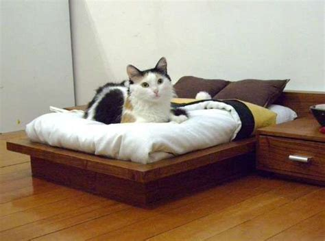 Bedroom Company 5208 by 132 Best I Cats Images On Animals Cats