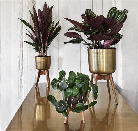 brass plant pot   wooden stand   forest