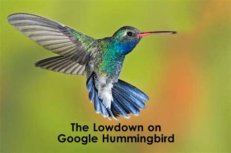 the lowdown on google hummingbird hummingbird algo update