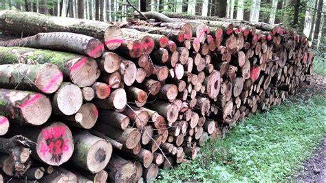 In Der Hütte by Holz In Der H 252 Tte