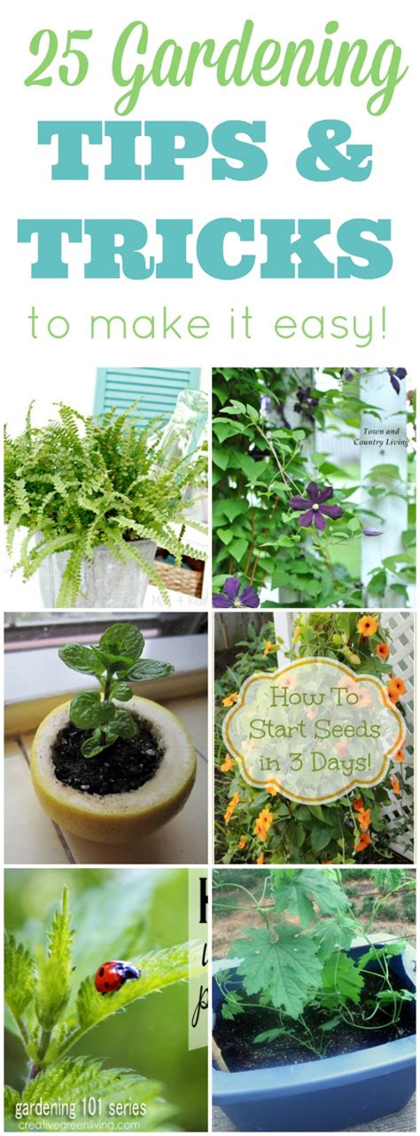 Gardening Tips And Tricks by 25 Amazing Gardening Tips And Tricks 4 Real