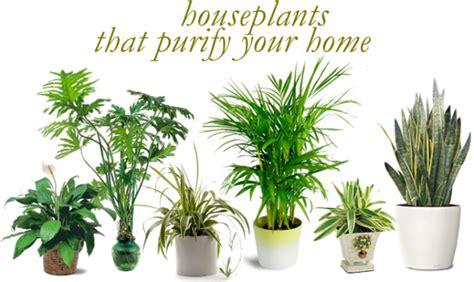 air purifying plants  nasa ratings blog