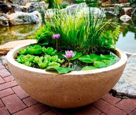 pond   pot create  container water garden balcony
