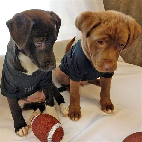 uber puppies uber sending puppies to philadelphia offices for nfl draft